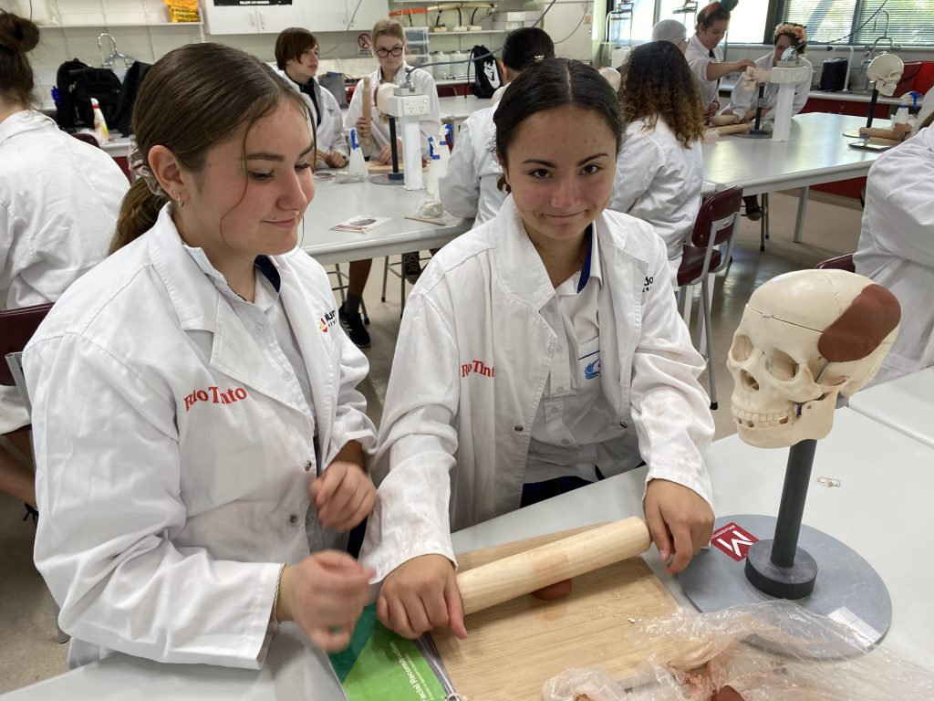 2 CLC students standing in white lab coats, applying Plasticine to a plastic skull